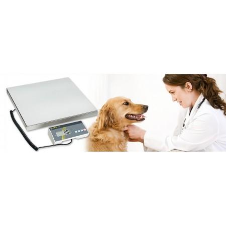 Veterinary scales